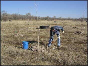 ONRT scientist Will Fetner planting a cottonwood (3/15/08)